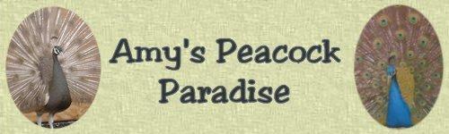 Amy's Peacock Paradise